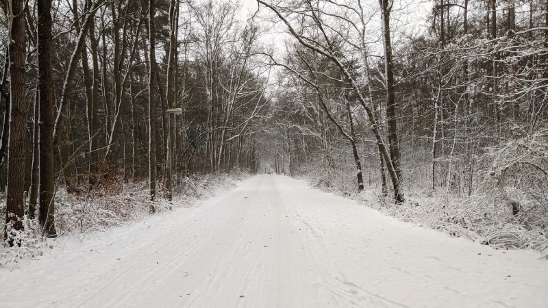 Sneeuw in het bos, vlakbij Baarn